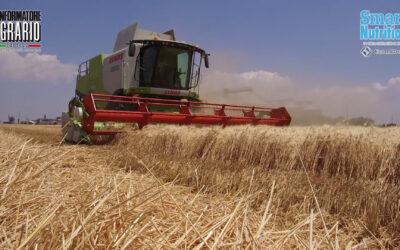 Il grano duro